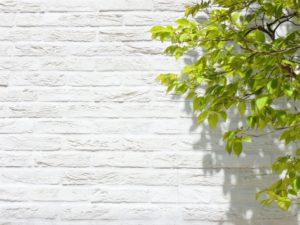 新緑と白壁
