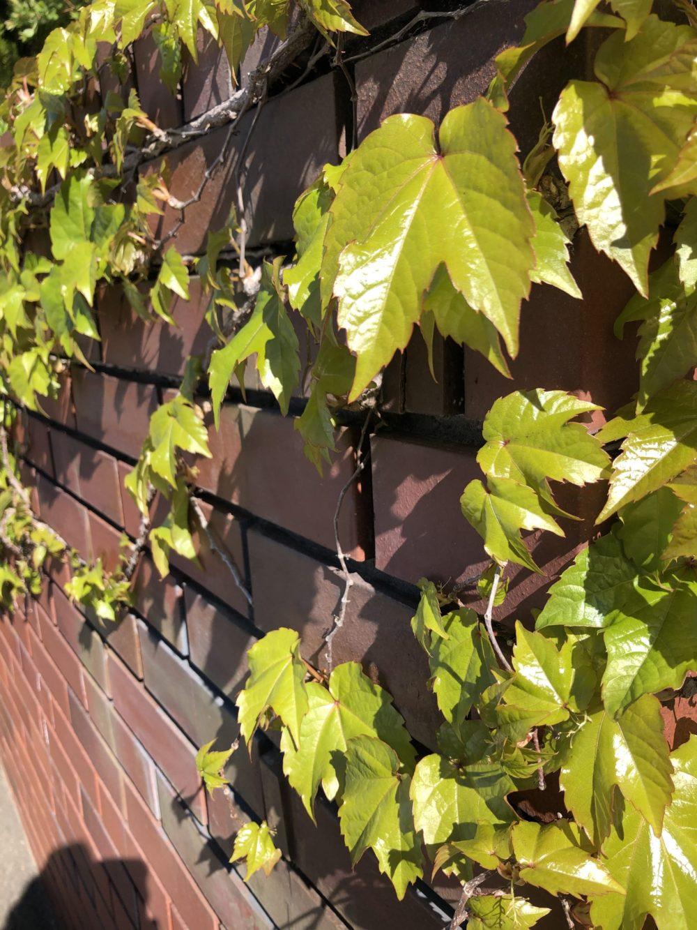 レンガと葉