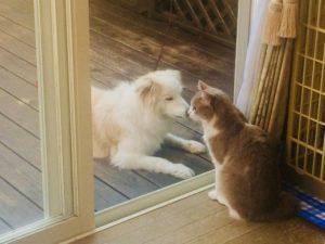 犬と猫仲良し